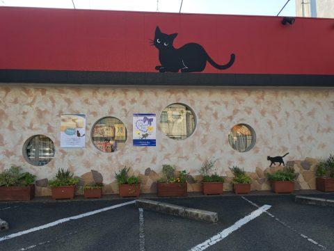 黒猫がかわいい